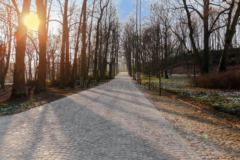 Le chemin en pierre en parc de ville avec l'arbre de sort et le soleil brûlant photo libre de droits
