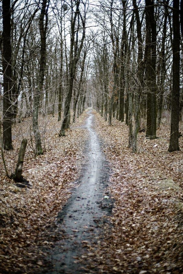 Le chemin entre dans la distance Vue d'automne blur images stock