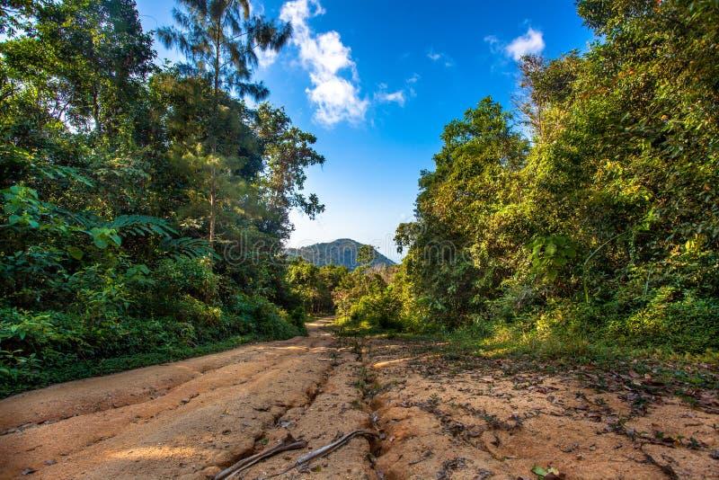 Le chemin mène dans les arbres dans la forêt de jungle photo libre de droits
