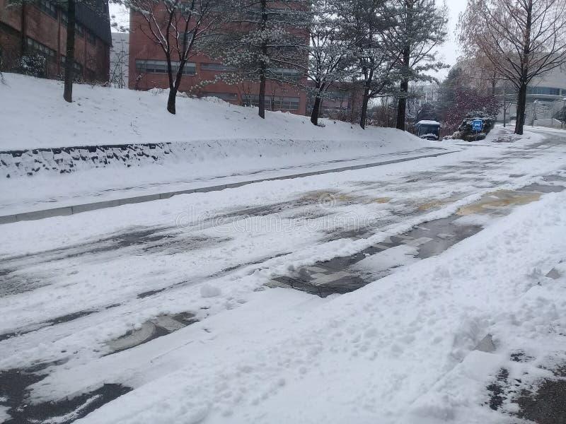 Le chemin ou l'allée ou le passage couvert vide dans l'avenue en bois avec deux rangées des arbres dégrossit avec la neige des cô image libre de droits