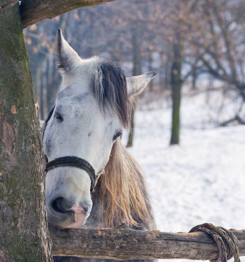 Le cheval affamé grignote logarithme naturel photo stock