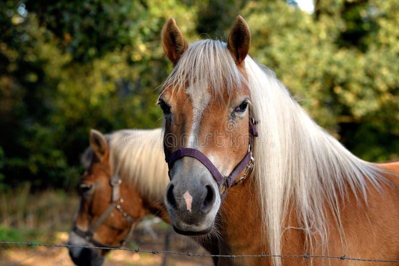Le cheval amical tourne sa tête photographie stock