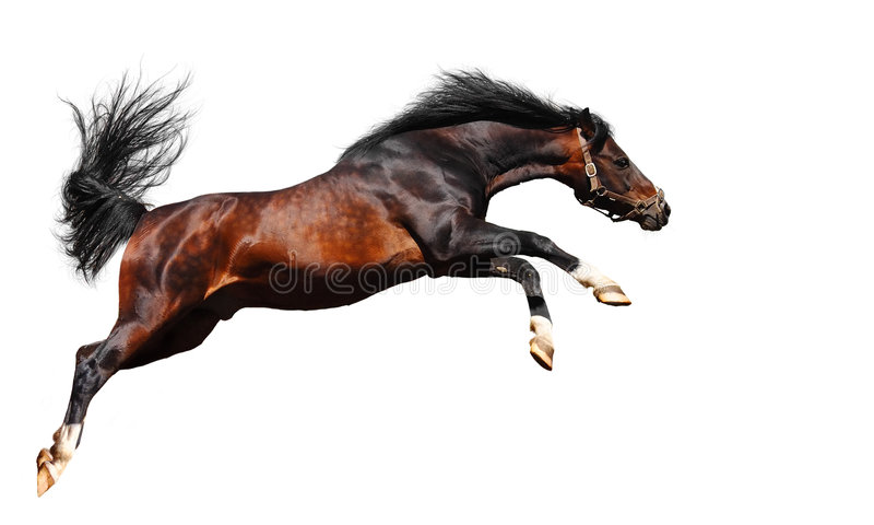 Le cheval Arabe saute images stock