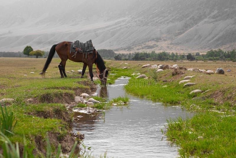 Le cheval boit l'eau de The Creek photographie stock libre de droits