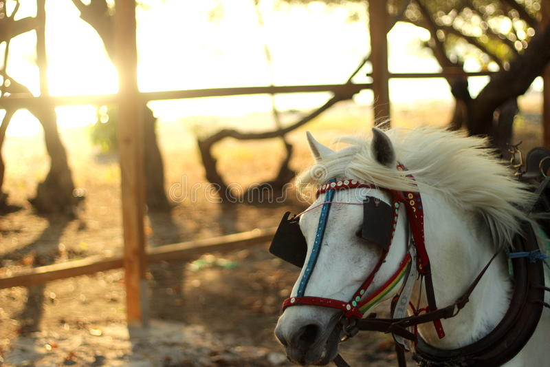 Le cheval courant photos stock