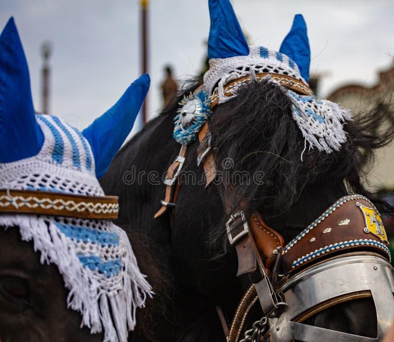 Le cheval a décoré le plan rapproché de têtes, Oktoberfest, Munich, Allemagne photos stock