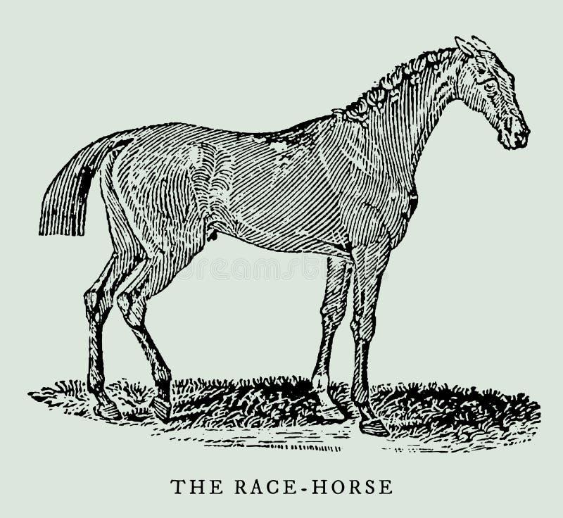 Le cheval de course dans la vue de profil Illustration illustration libre de droits