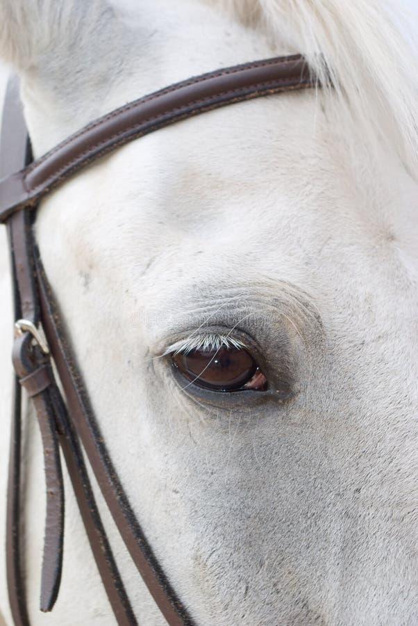 Le cheval est bras de chalut photo libre de droits