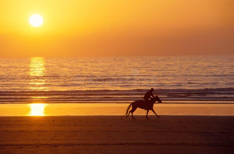 Le cheval et le cavalier galopants au coucher du soleil sur le sable échouent photographie stock libre de droits
