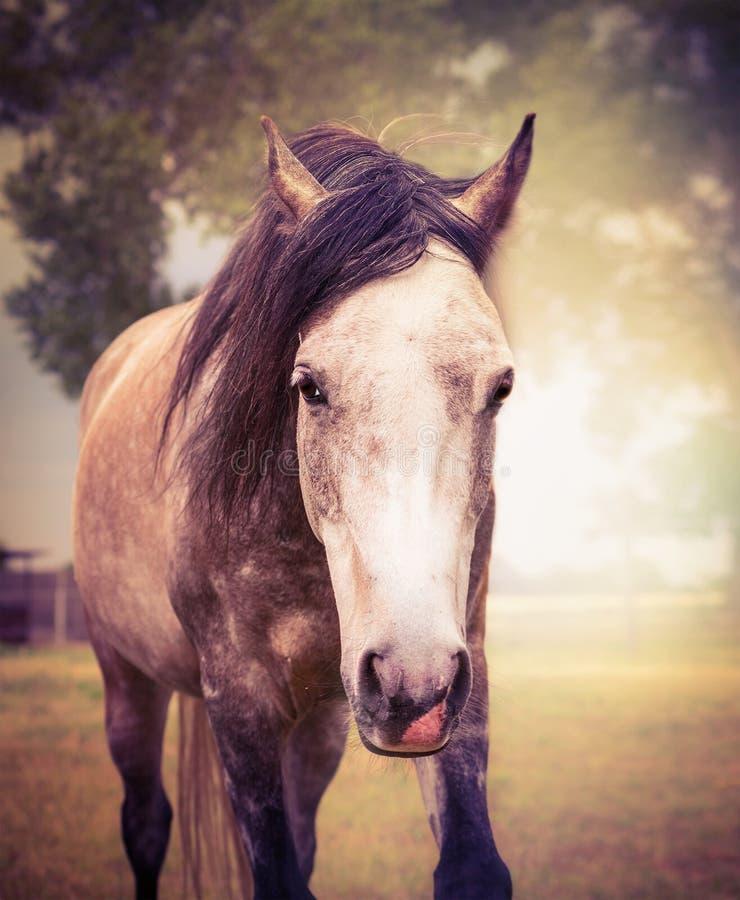 Le cheval gris sur le fond de nature d'automne, se ferment vers le haut du portrait photo libre de droits