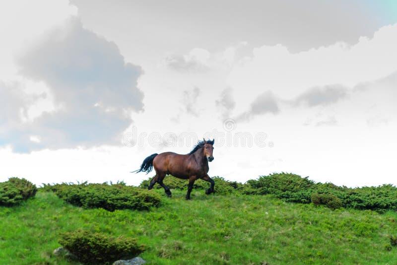 Le cheval qui fonctionne à l'arrière-plan du ciel et des nuages photos stock