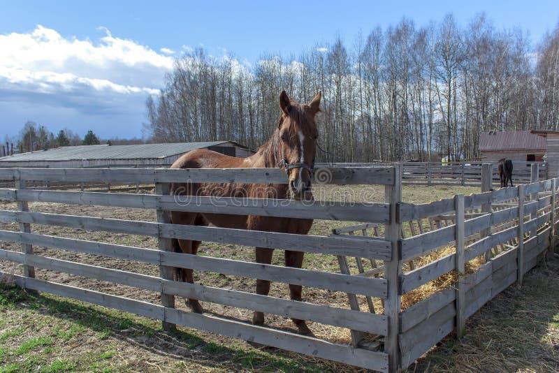 Le cheval rouge se tient dans le stylo derrière la porte photo libre de droits