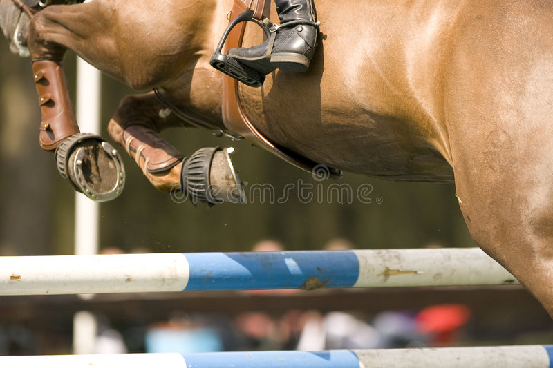 Le cheval sautant 012 photo stock