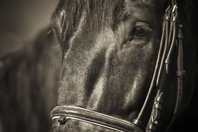 Download Le cheval sautant 034 image stock. Image du vert, action - 4894909