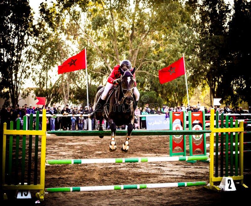 Le cheval sautant dans le championnat images libres de droits