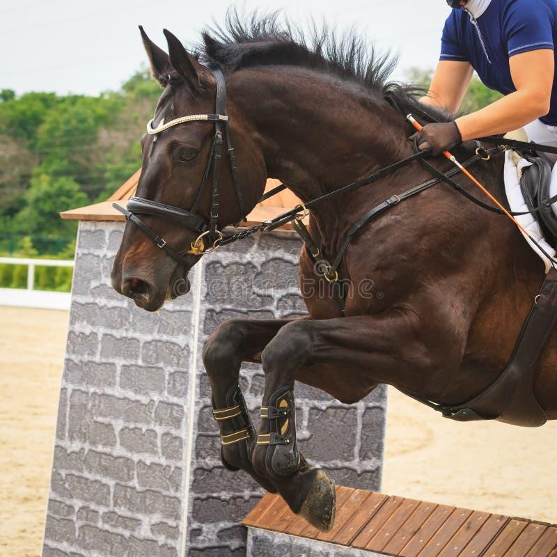 Le cheval saute par-dessus un obstacle en concours en sautant photo libre de droits