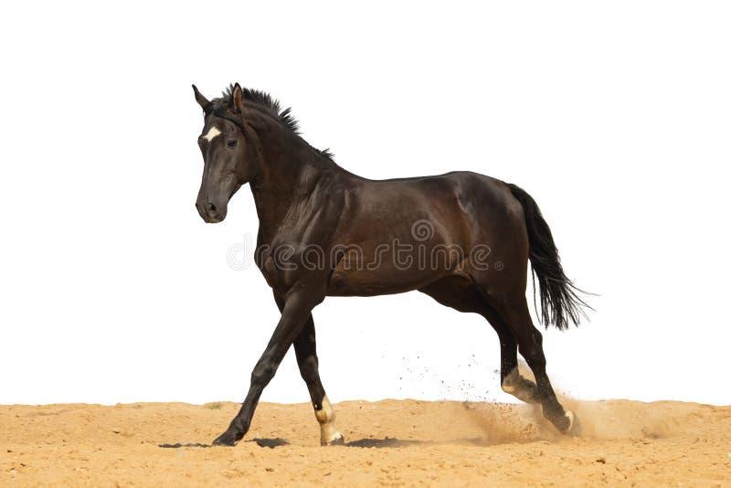 Le cheval saute sur le sable sur un fond blanc image libre de droits