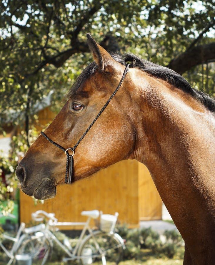 Le cheval se tient sur un fond des feuilles vertes photos libres de droits