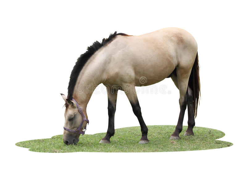 Le cheval simple mangent quelques herbes images stock