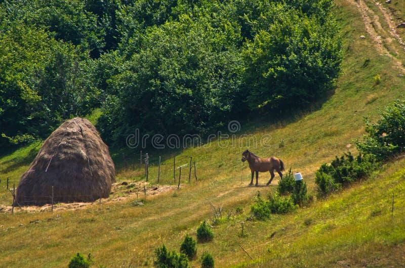 Le cheval sur un pré au jour d'été ensoleillé agacent dedans photographie stock