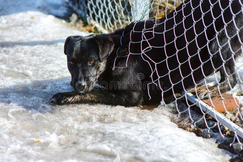 Le chien égaré noir a fait un trou dans la barrière images libres de droits