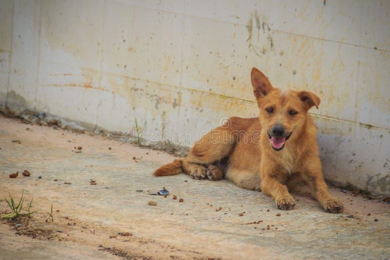 Le chien égaré sans abri abandonné par rouge se situe dans la rue peu images stock