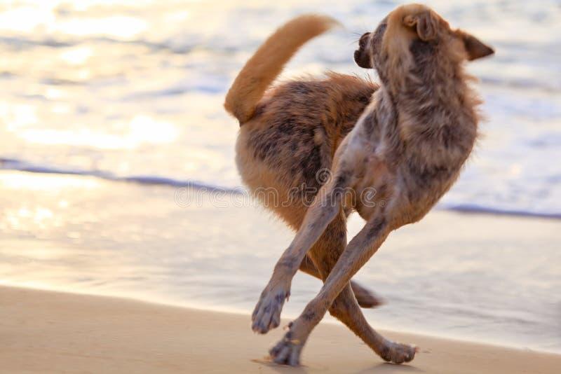Le chien attrape sa propre queue images libres de droits