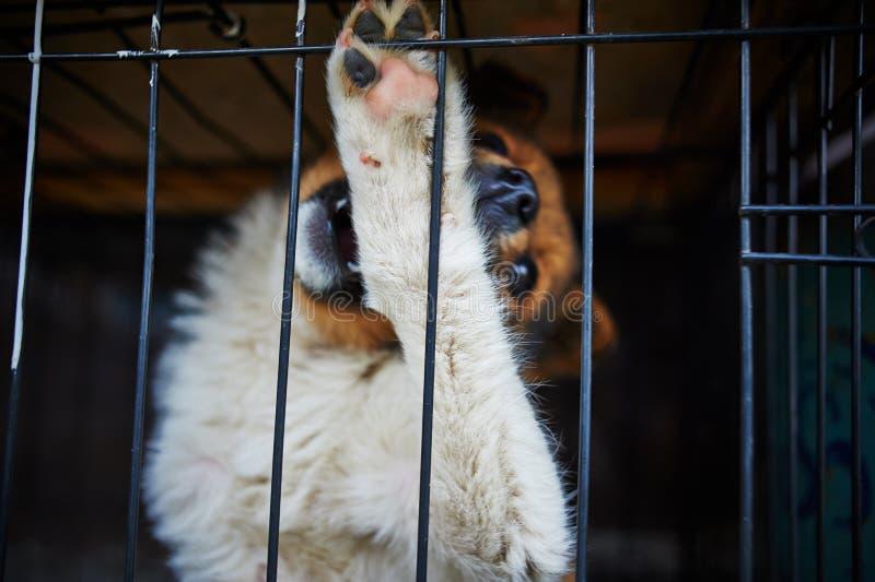Le chien dans la cage photos stock