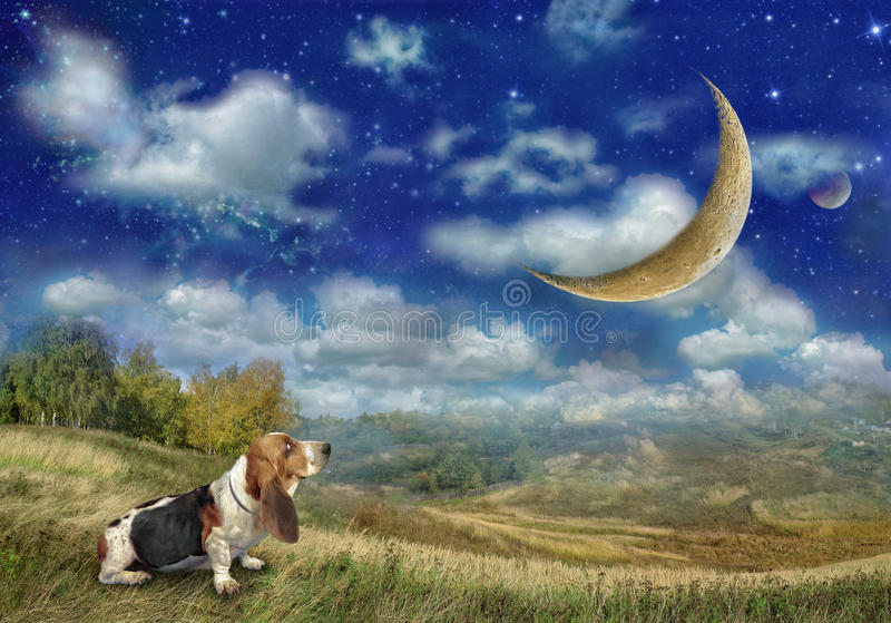 Le chien de Basset Hound regarde la grande lune photo stock