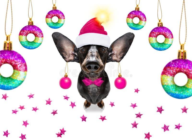 Le chien de Noël santa claus et les balles de Noël ou les baubles pendants photos libres de droits