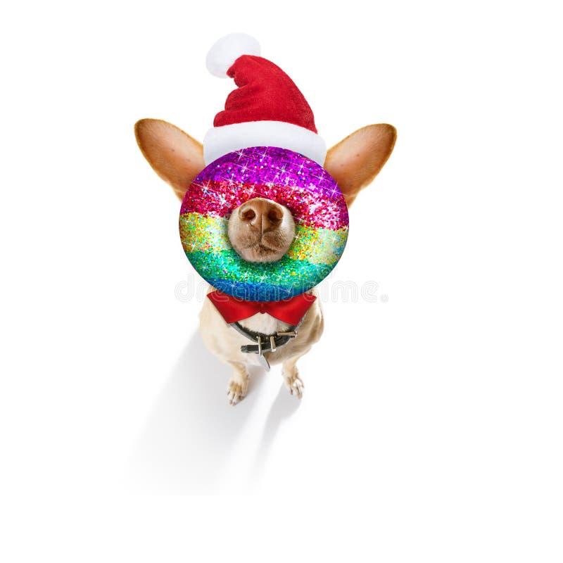 Le chien de Noël santa claus et les balles de Noël ou les baubles pendants image stock