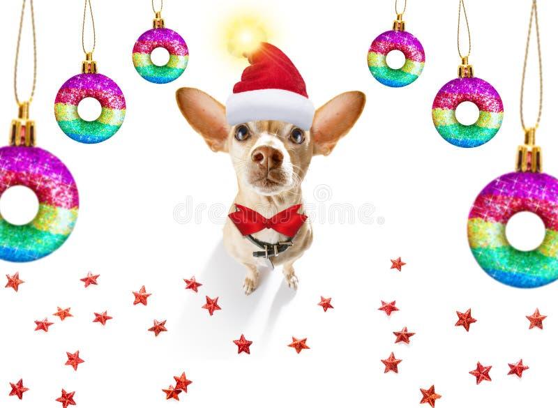 Le chien de Noël santa claus et les balles de Noël ou les baubles pendants photographie stock libre de droits