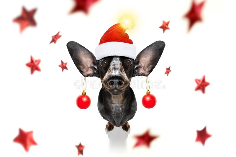 Le chien de Noël santa claus et les balles de Noël ou les baubles pendent des oreilles images stock