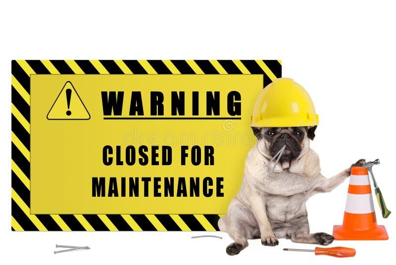Le chien de roquet avec le casque de sécurité jaune de constructeur et le panneau d'avertissement avec le texte se sont fermés po photographie stock