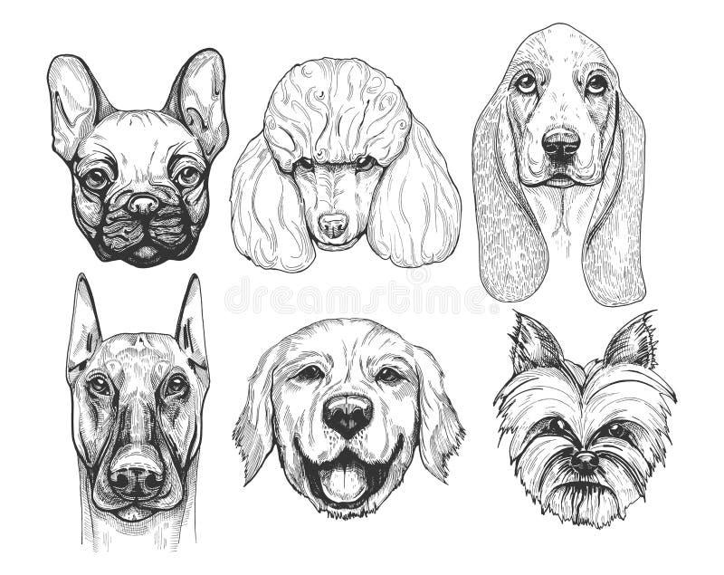 Le chien différent multiplie des portraits illustration de vecteur