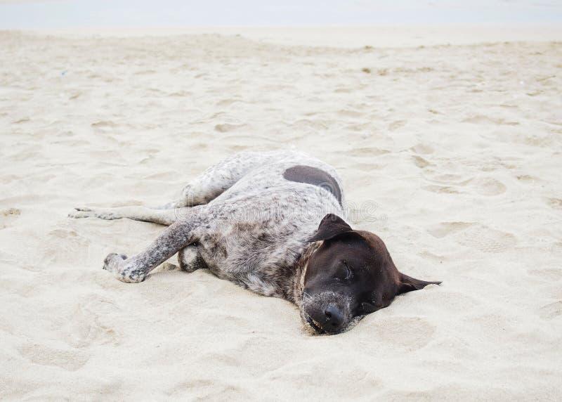 Le chien dort sur la plage photographie stock libre de droits