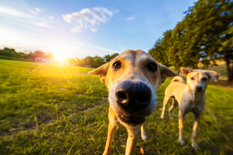 Le chien en parc public avec le soleil photos stock