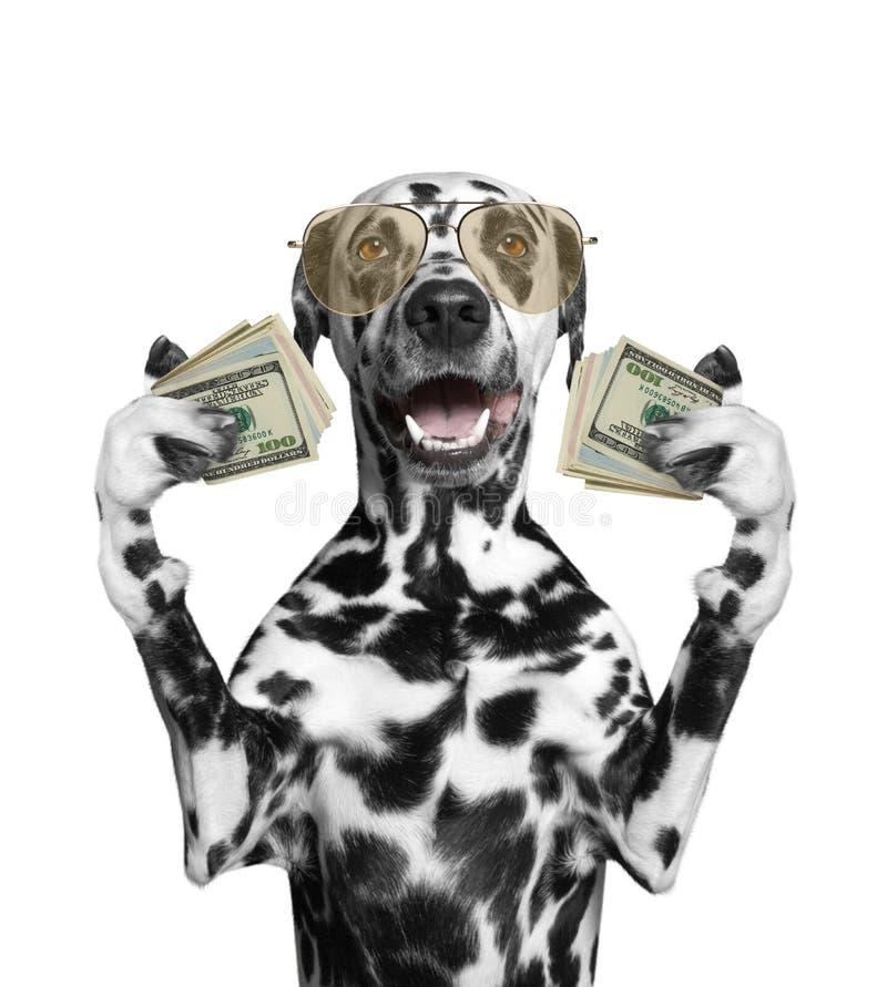 Le chien en verres tient dans des ses pattes beaucoup d'argent photos libres de droits