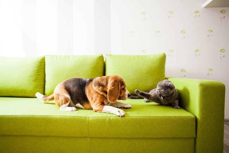 Le chien et le chat jouent images stock