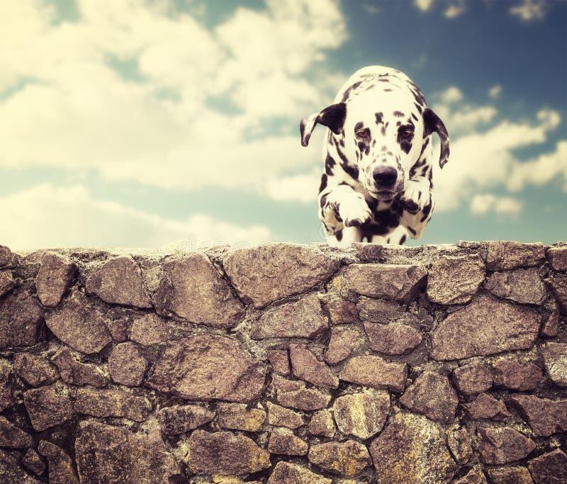 Le chien heureux saute par la barrière photos libres de droits
