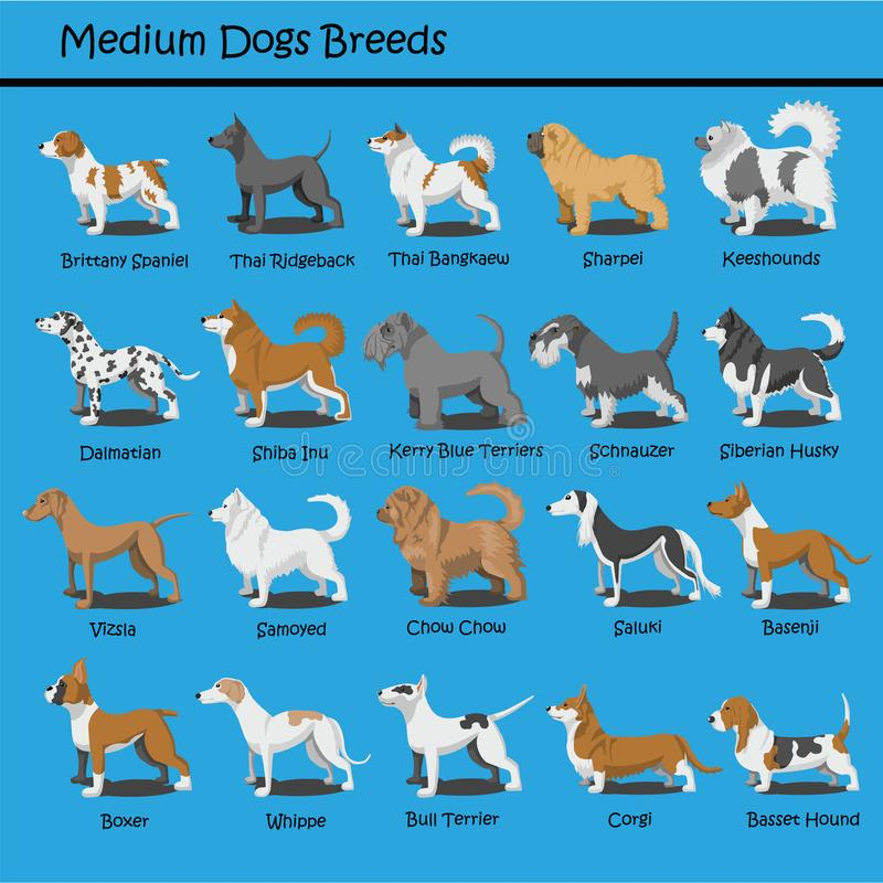 Le chien moyen multiplie le chien les bandes dessinées que mignonnes de chiot de vecteur de conception de bande dessinée conçoive illustration stock