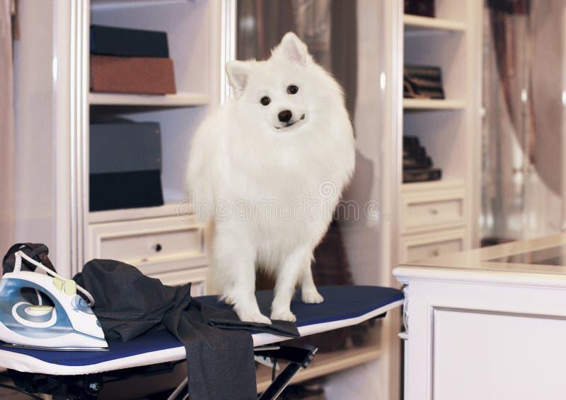 Le chien n'exigera pas le pantalon propre et un journal de chemise photographie stock