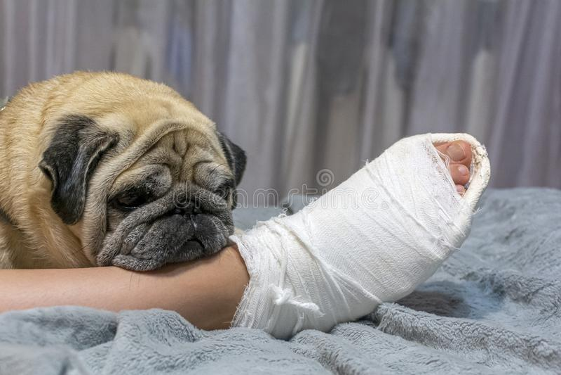 Le chien posa la tête sur le pied du propriétaire Le chien montre de la pitié et de la compassion photo libre de droits