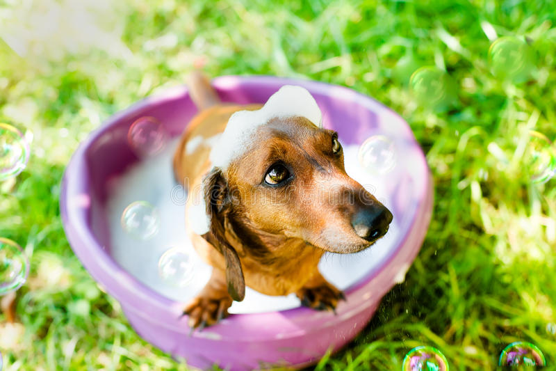 Le chien prend un bain photo stock