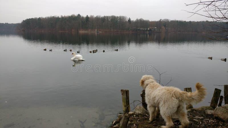 Le chien regarde au-dessus de la mer photo libre de droits