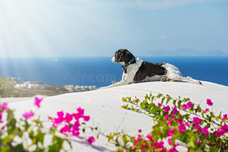 Le chien regarde la mer photo libre de droits