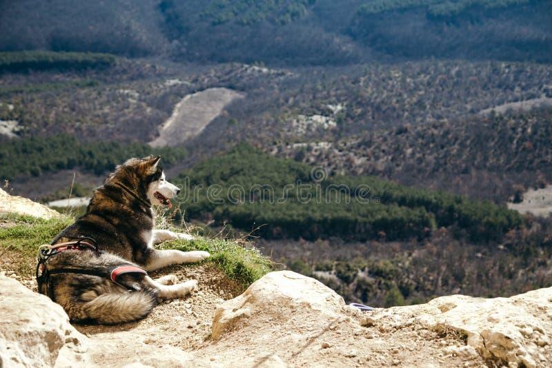 Le chien s'étend au bord d'une roche images stock