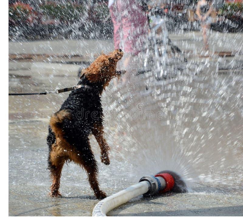 Le chien sautant dans l'eau photographie stock libre de droits