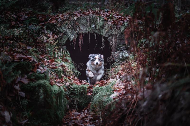 Le chien sautant dans la jungle photographie stock