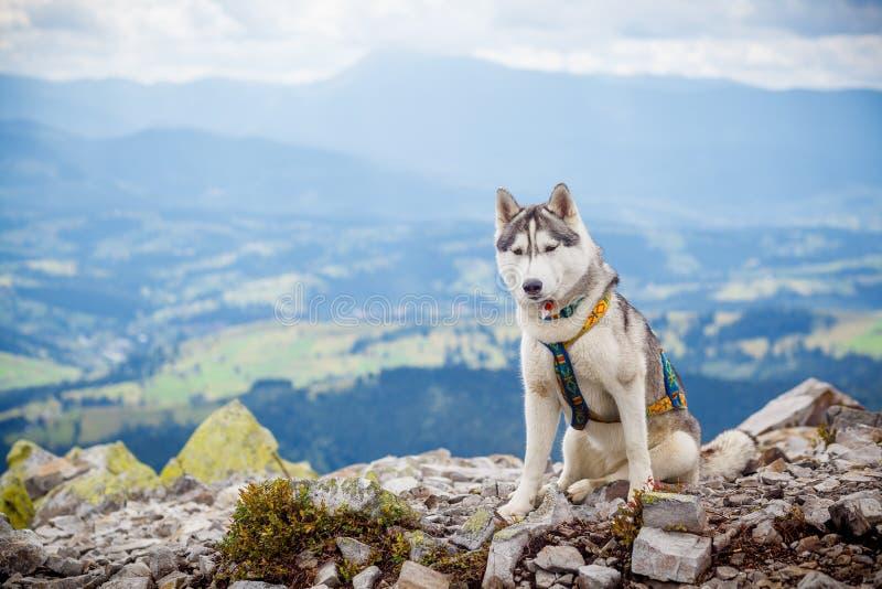 Le chien se reposant regarde les montagnes image stock